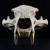 Dash Cranium