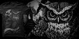 UNREST - Owl