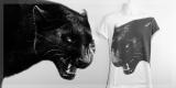 Hard Times - Panther