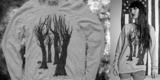 alumni trees