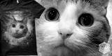 Venus Fallen - Meow Nebula